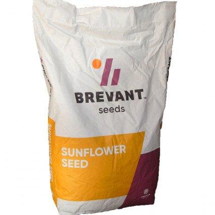 Семена подсолнечника П64ЛЕ99 / P64LE99