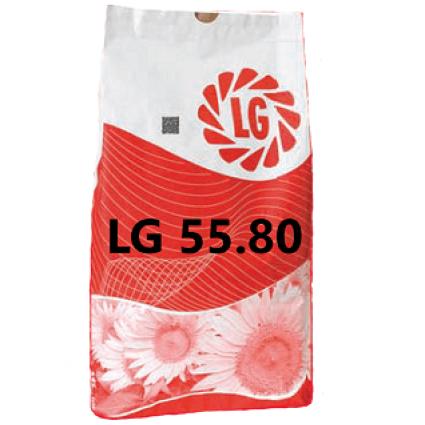 ЛГ 5580 Подсолнечник