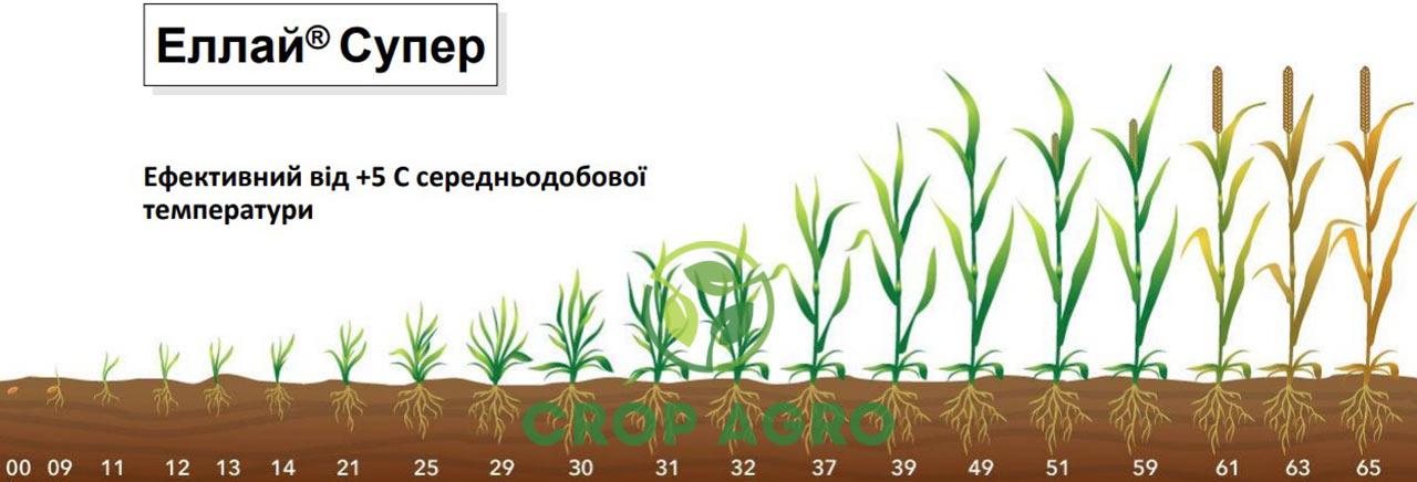 Селективный к пшенице и ячменя от стадии 2-3 листьев до начала выхода в трубку