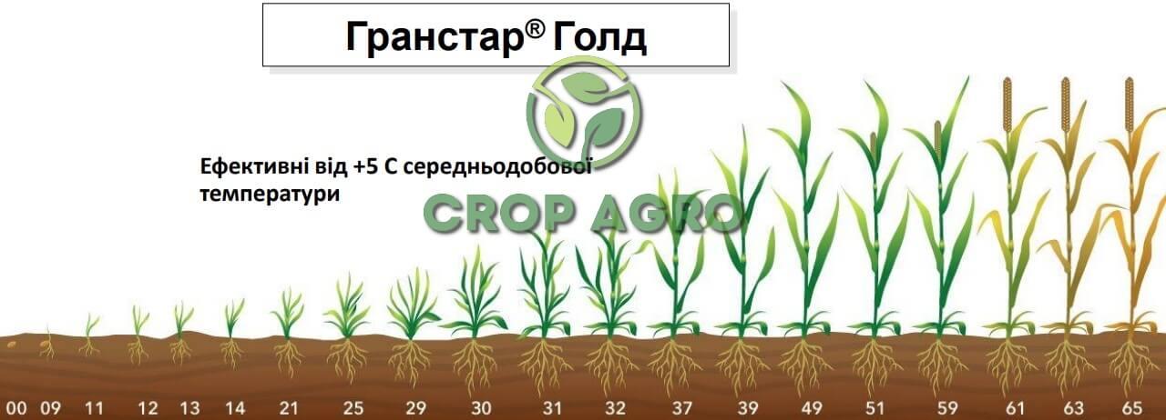 Селективный к пшеницы и ячменя от стадии 2-3 листьев до дисковым листка включительно