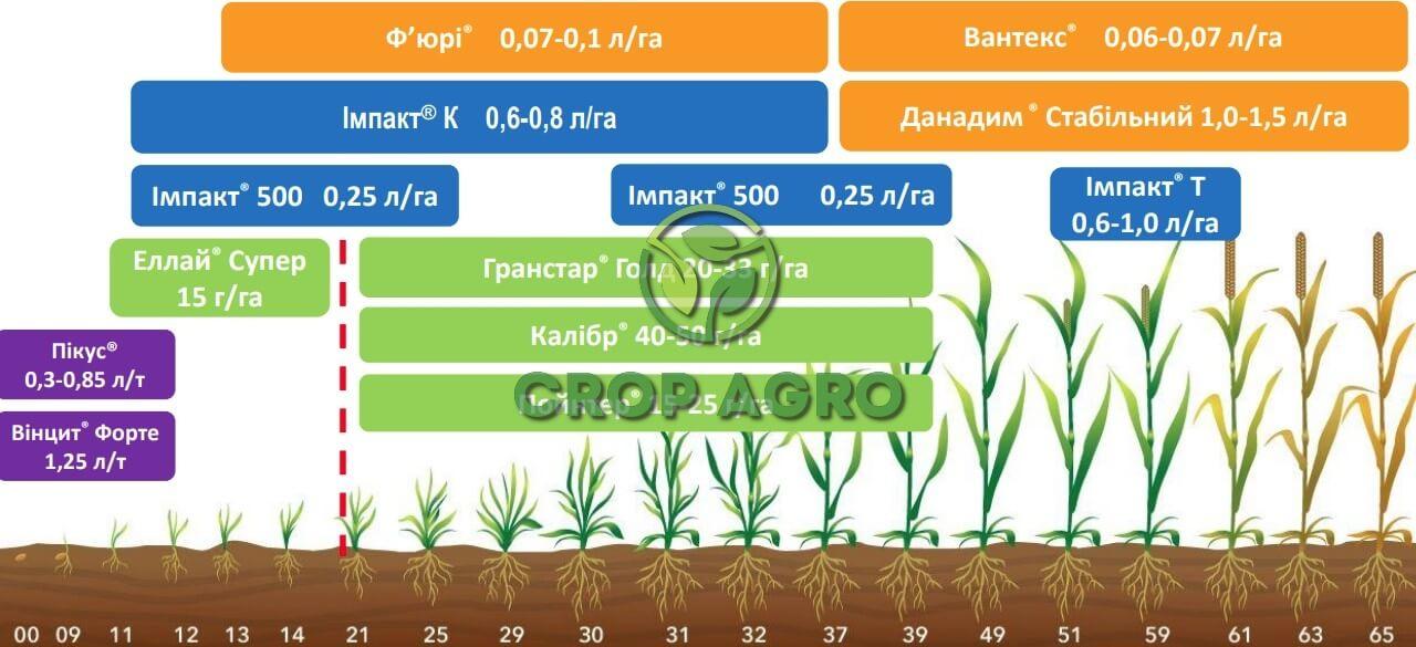 FMC технология защиты озимой пшеницы