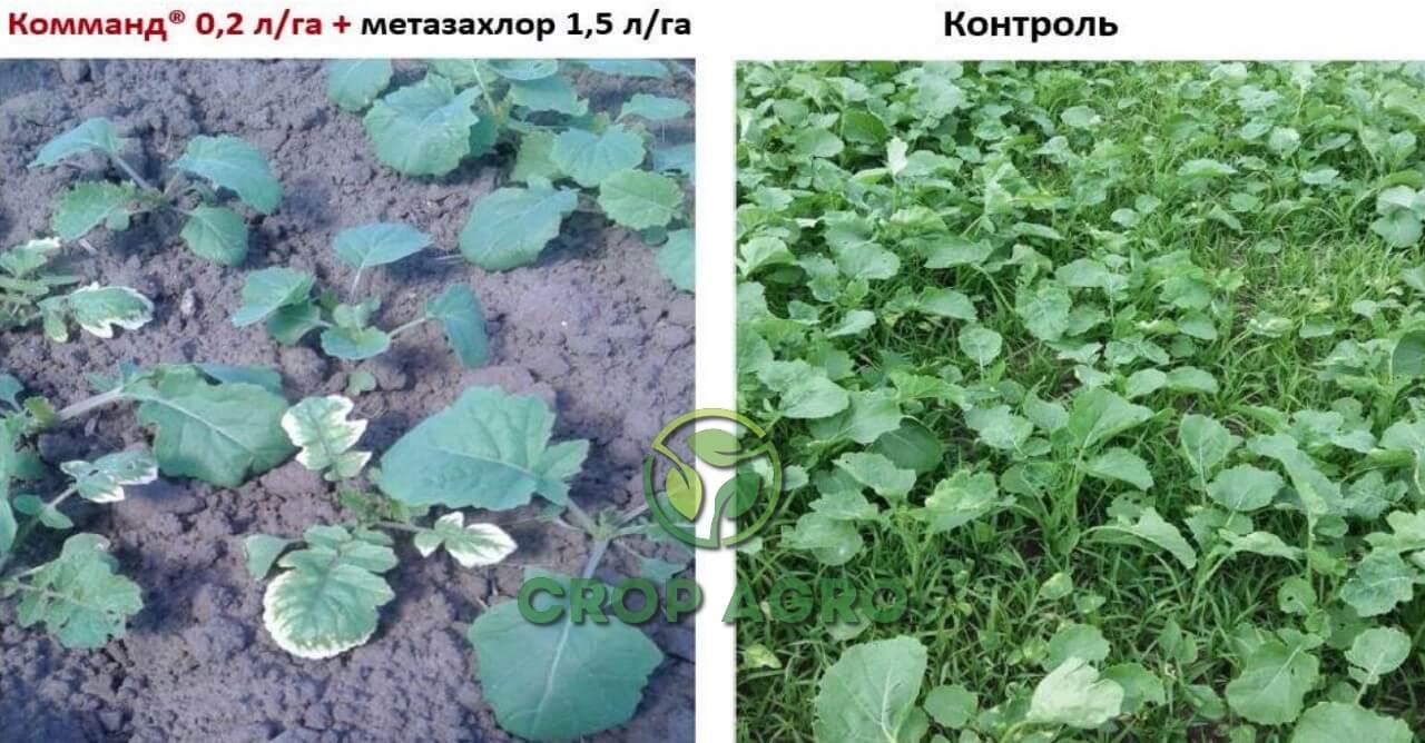 Эффективность действия баковой смеси Комманд® 0,2 л / га + метазахлор 1,5 л / га против широкого спектра сорняков