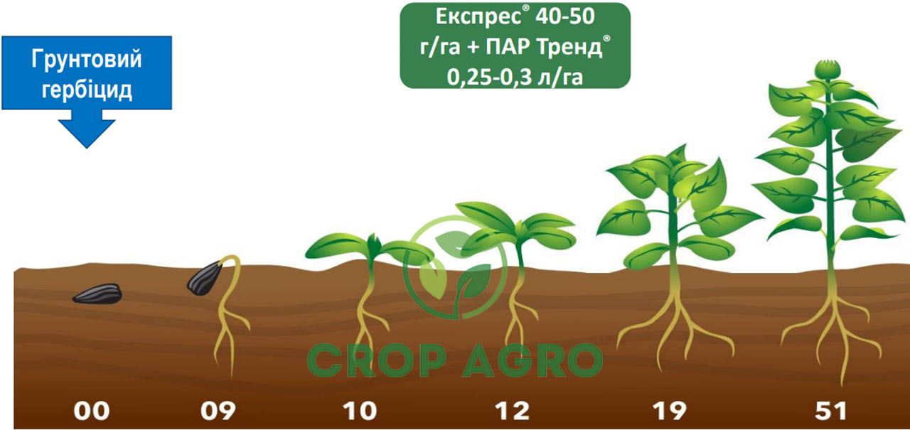 Система защиты подсолнечника с грунтовым гербицидом и гербицидом Экспресс 75 ВГ