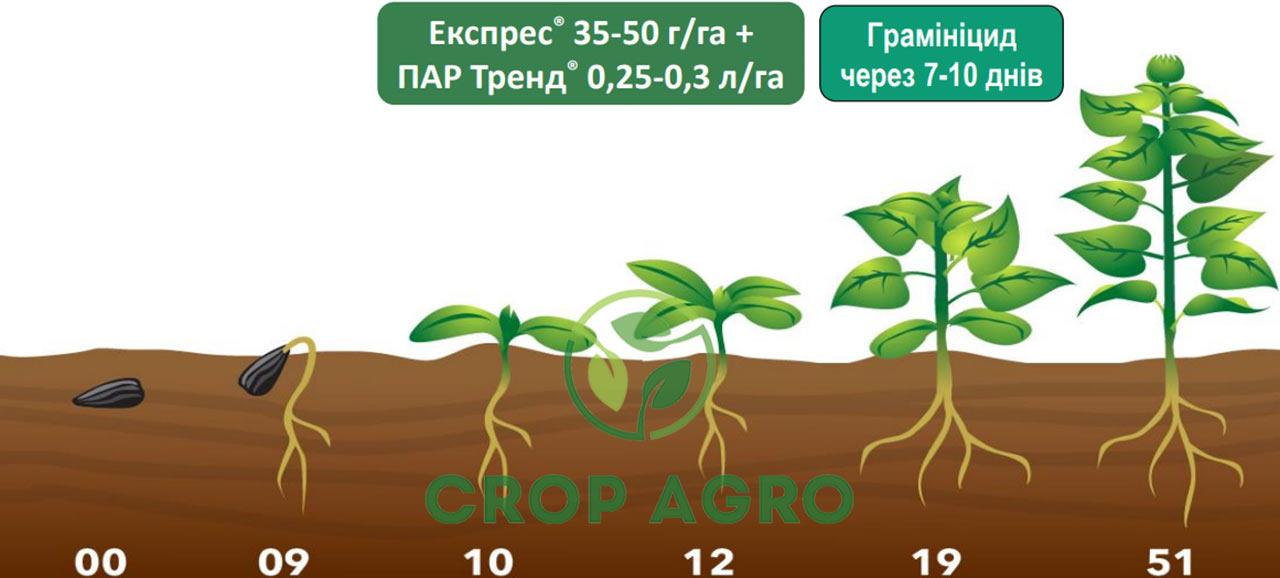 Система защиты подсолнечника без почвенного гербицида и гербицидом Экспресс 75 ВГ