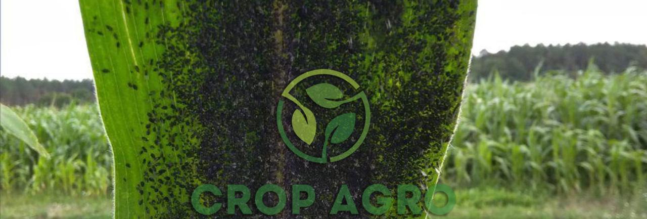 инсектициды против тли на кукурузе