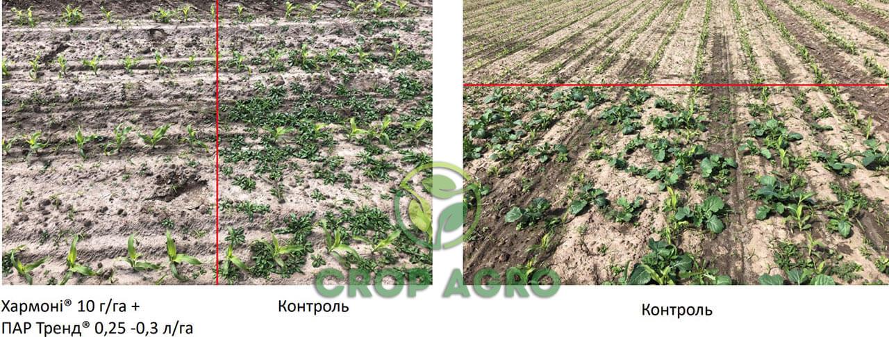 Защита кукурузы гербицидом Хармони