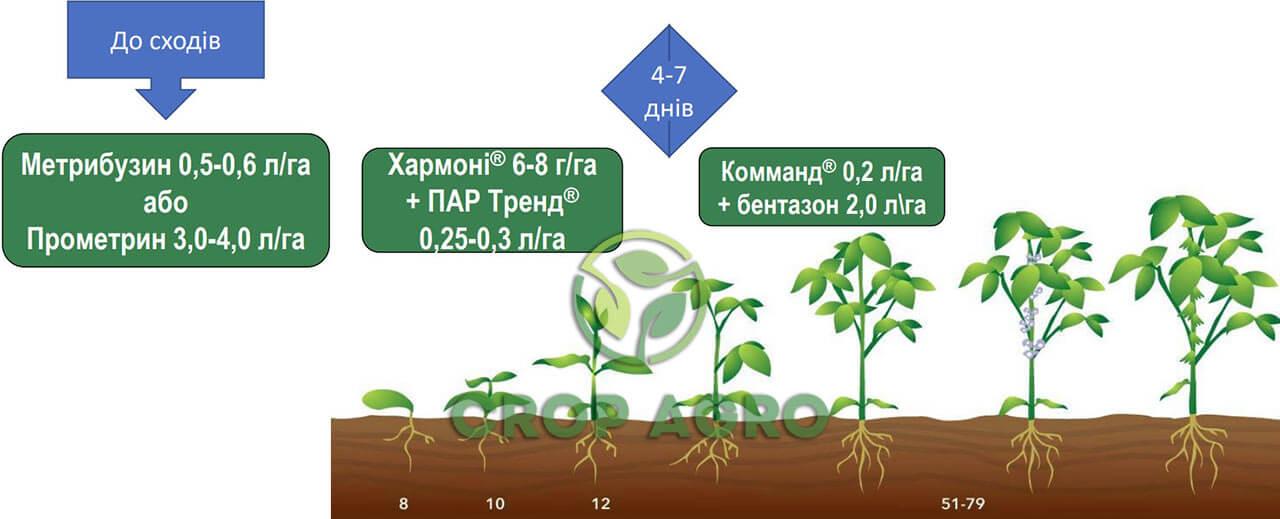 Схема защиты для борьбы с переросшими сорняками Хармони 6-8 г / га + ПАВ Тренд 0,25-0,3 л / га, а через 4-7 дней баковых смесей Комманд 0,2 л / га + бентазон 2,0 л / га