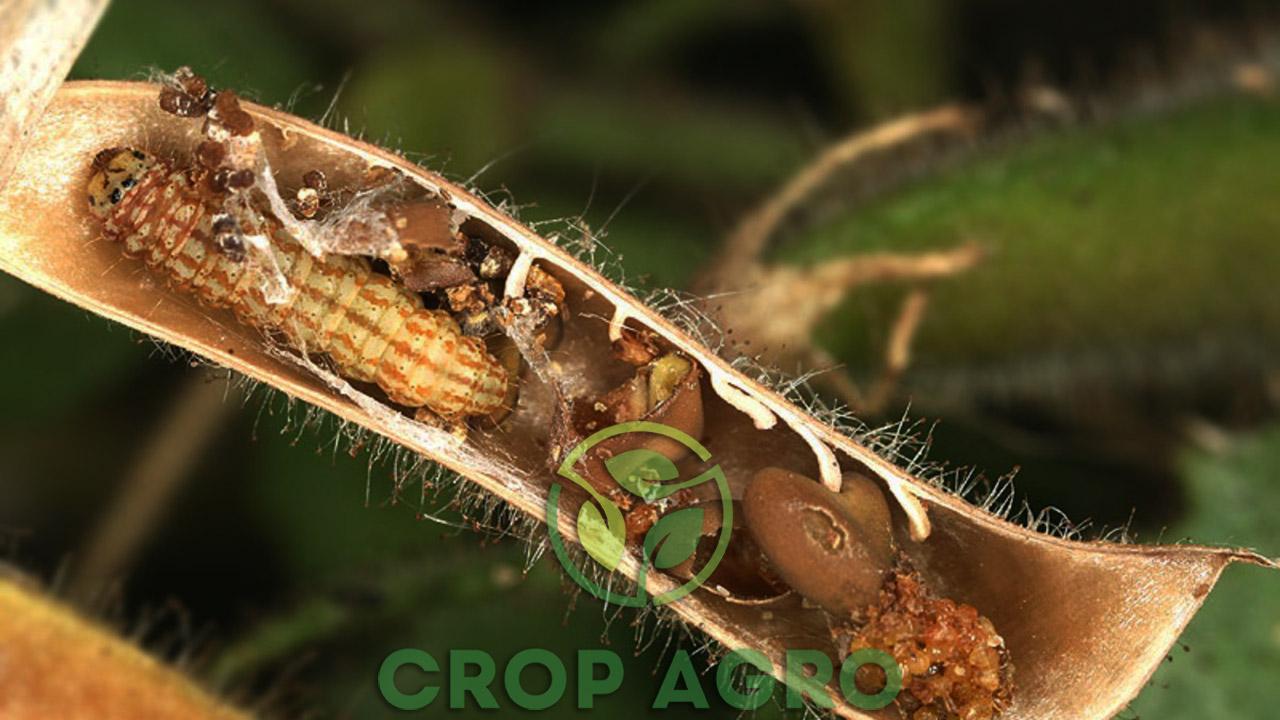 инсектициды против вредителей на сое