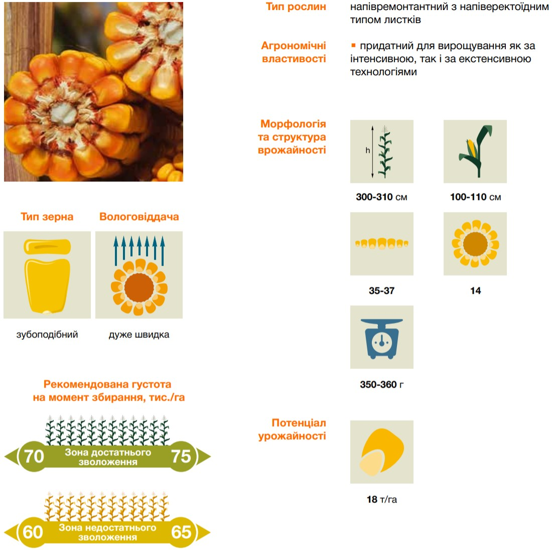 характеристики кукурузы Керберос