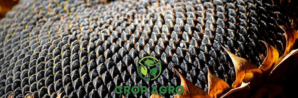 купить семена подсолнечника в украине