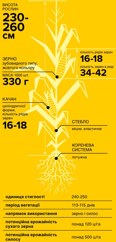 Кукуруза НС 2922 Нертус - Характеристики