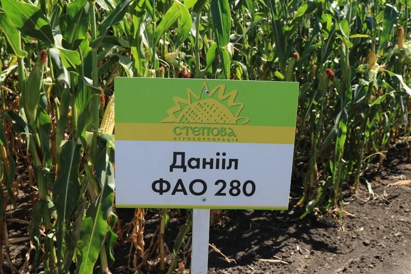Кукуруза Даниил