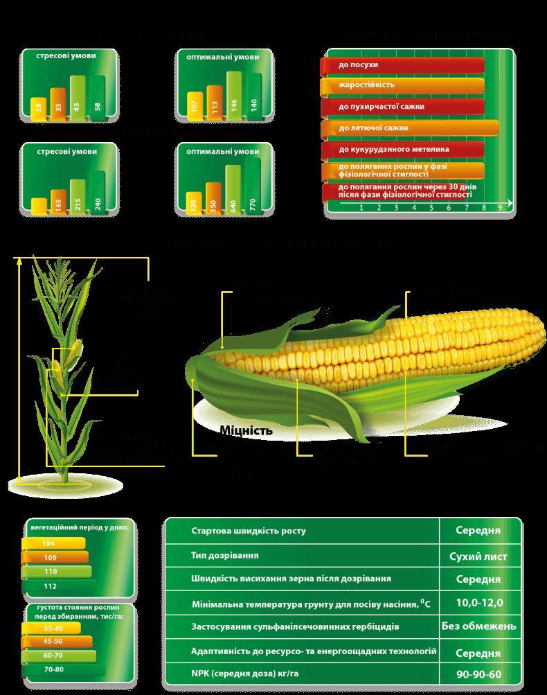 Кукуруза Вилия