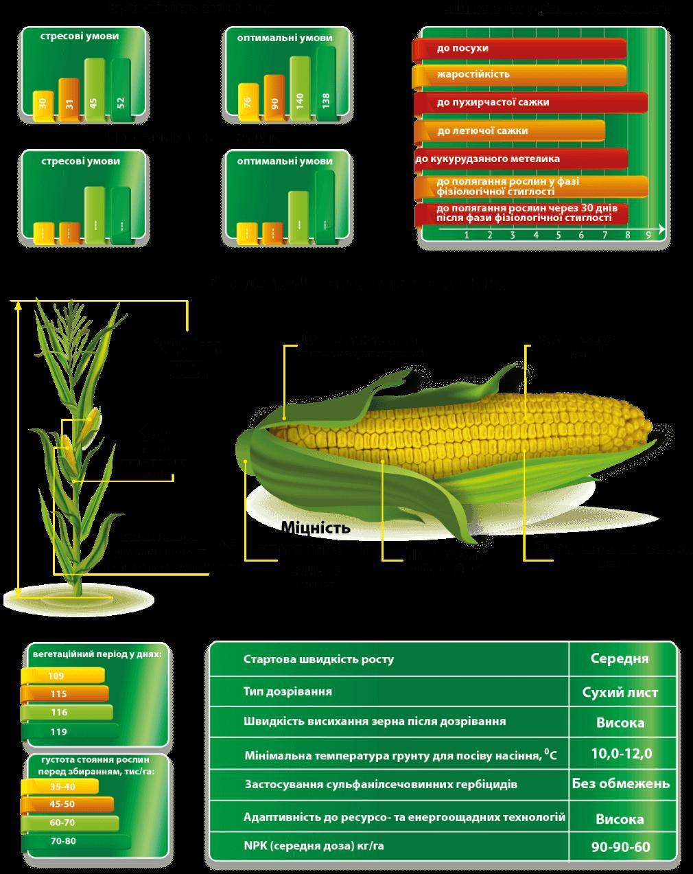 Врожайність гібрида кукурудзи Сплав МС і Характеристики