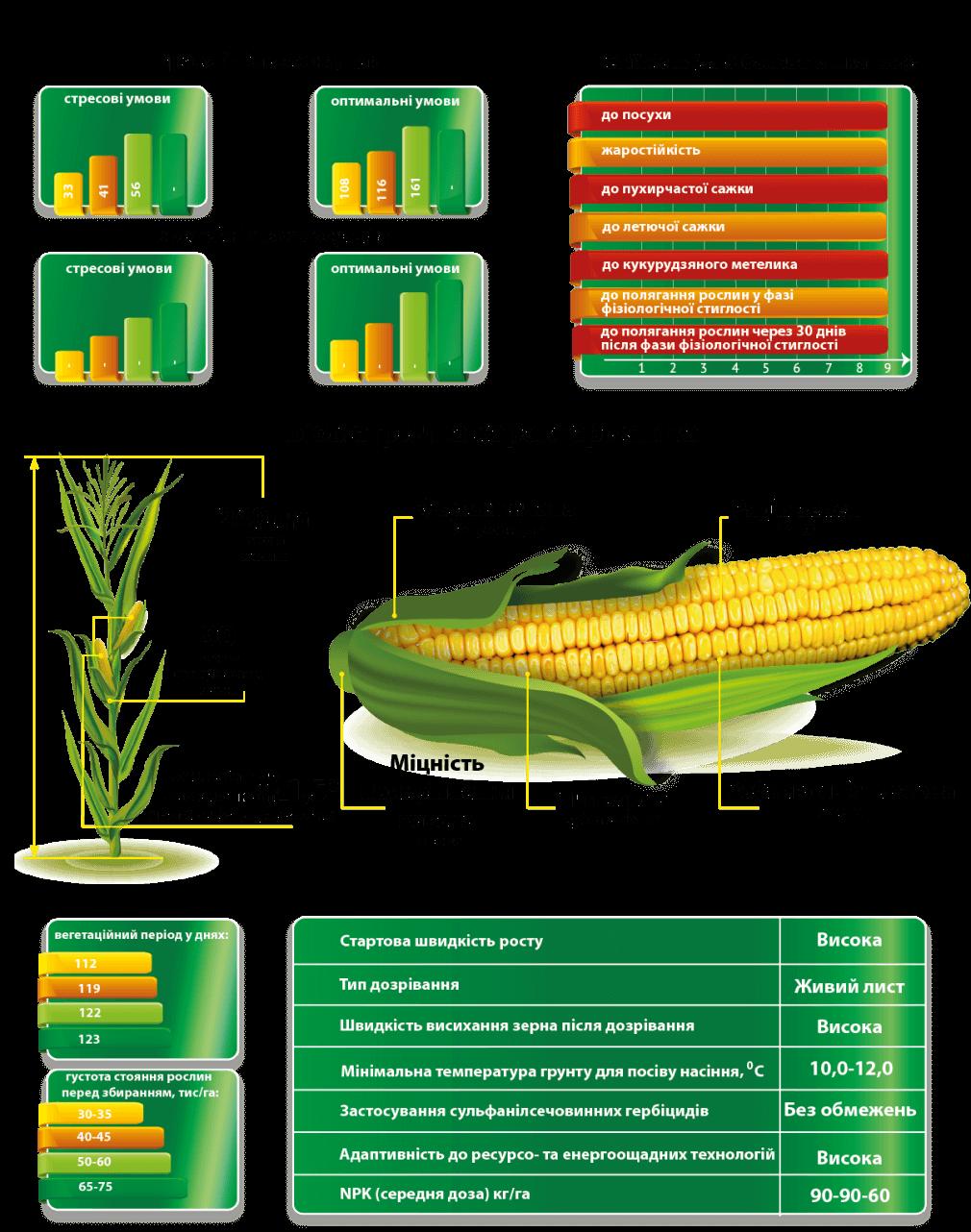 Урожайность гибрида кукурузы Визир и Характеристики